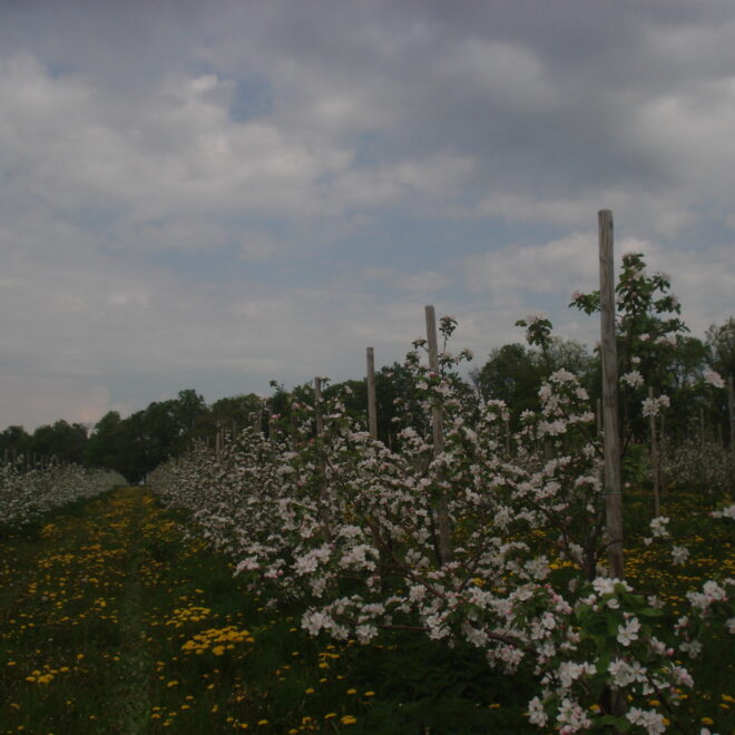 kevad2011-1