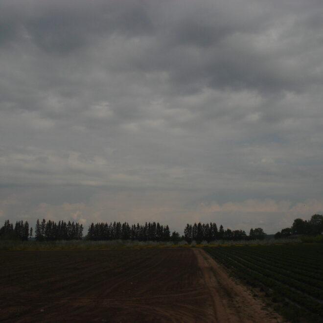 kevad2011-4