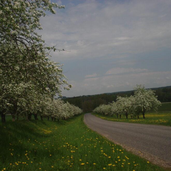 kevad2011